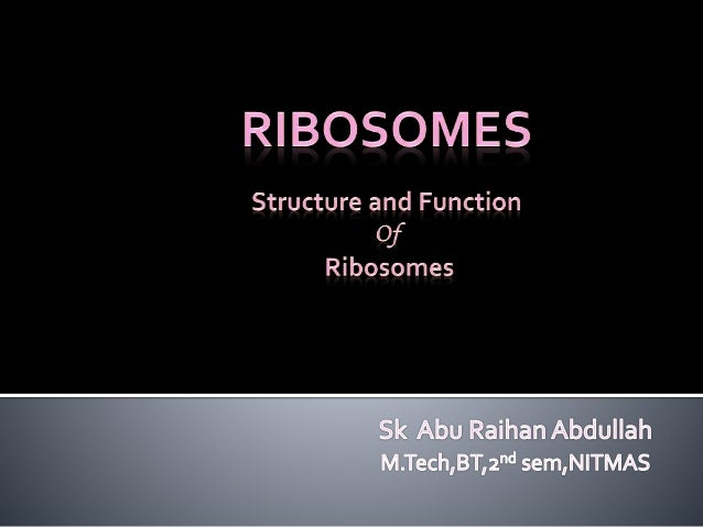 Ribosomes structure and function pdf
